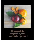 Hemp Seed - Lip Balm Tin Dreamsicle