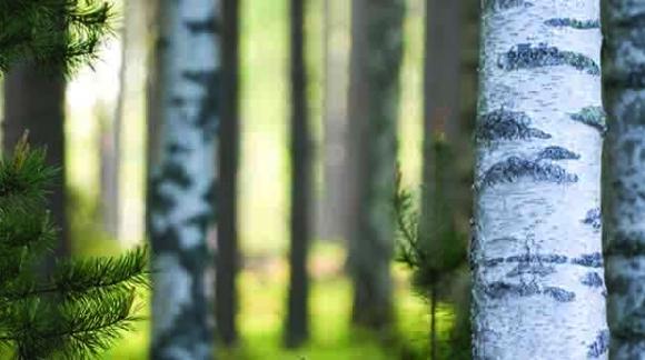 Inshape - inspireeritud Põhjamaade looduse puhtusest ja värskusest.